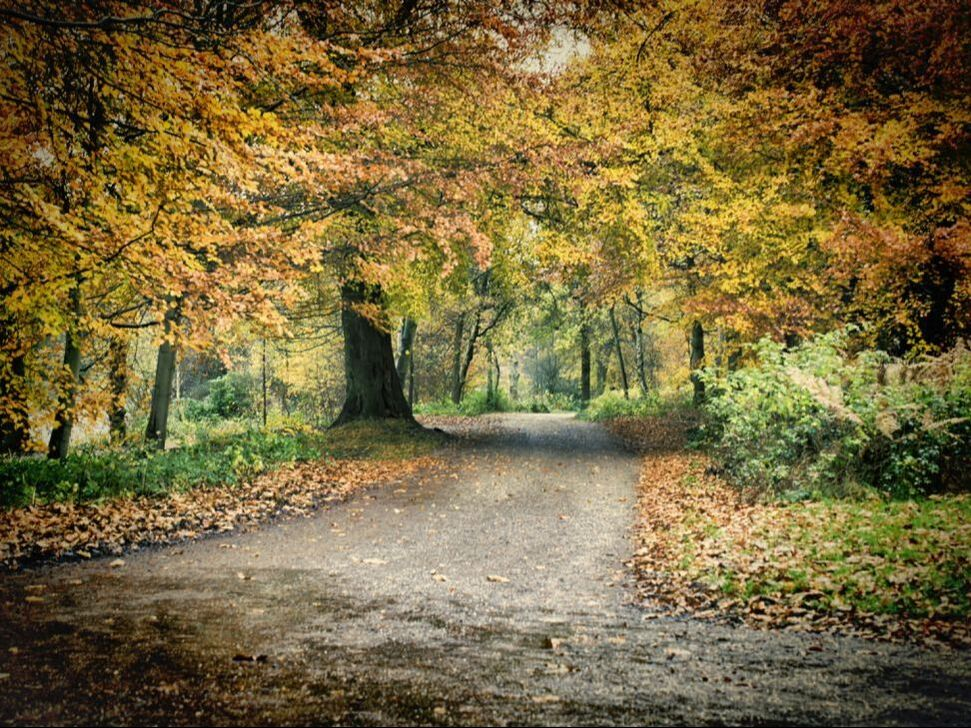 A road leading through autumn woodland
