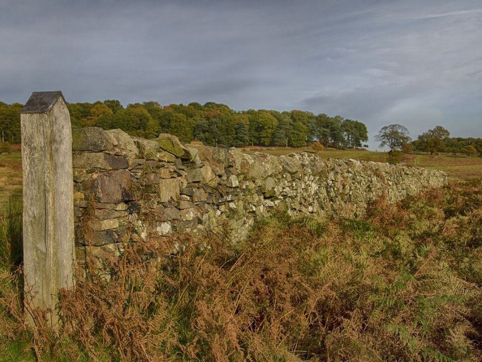 a drystone wall in autumn moorland